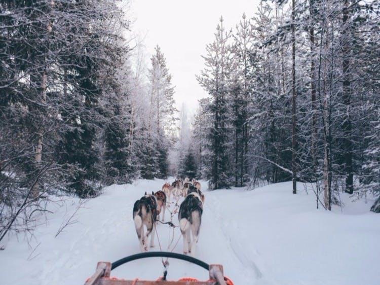 Groepsreis Wintersport Lapland Zweden