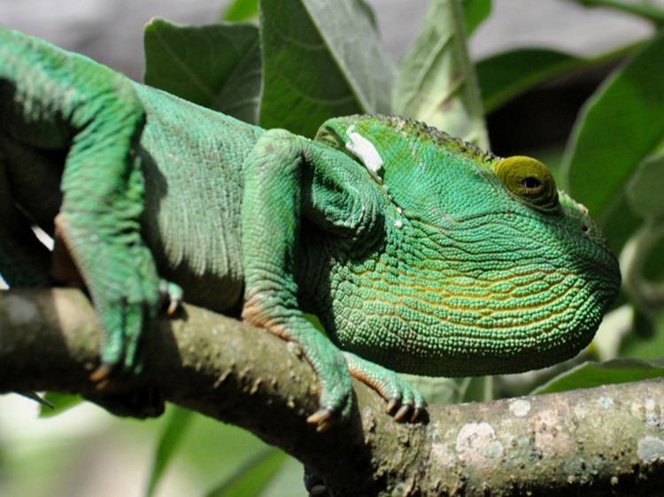 Singlereis Madagaskar 17-daagse rondreis