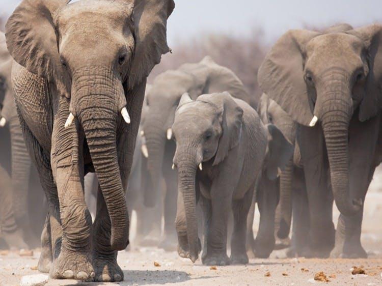 Singlereis Zuidelijk Afrika in 3 weken
