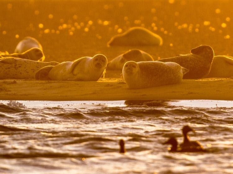 Groepsreis Actieve rondreis Waddeneilanden