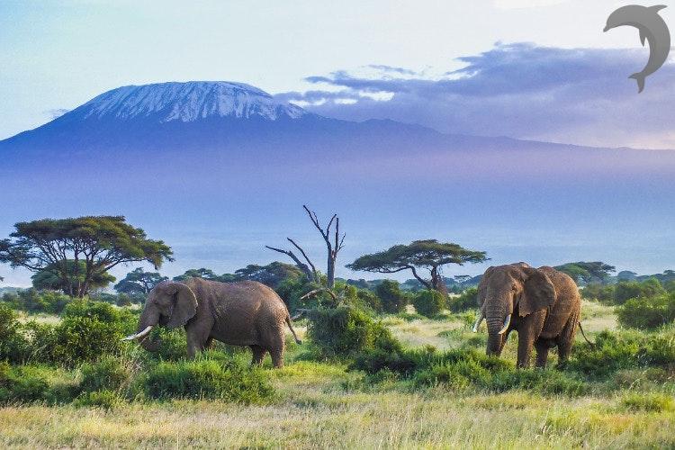 Tanzania – de ultieme wildlife safari van Afrika