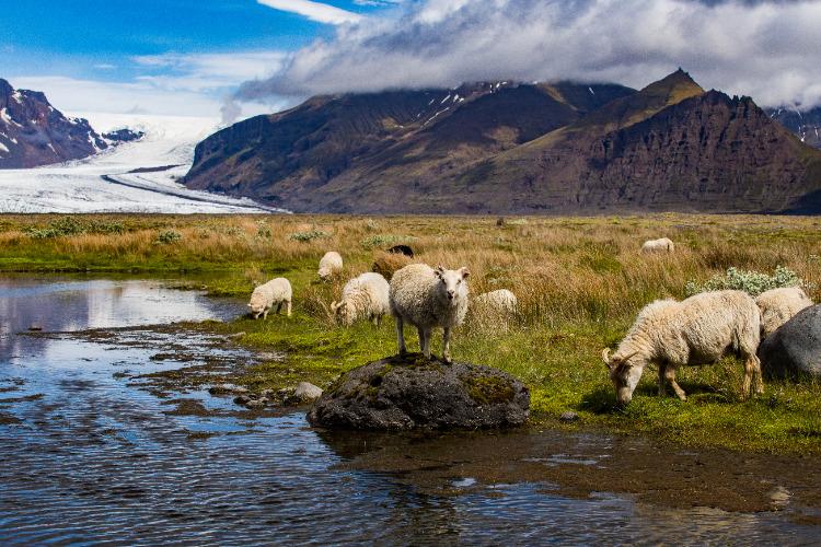 Singlereis Zuid-IJsland in de zomer
