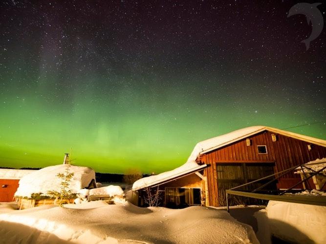 Singlereis Winters Avontuur in Zweeds Lapland