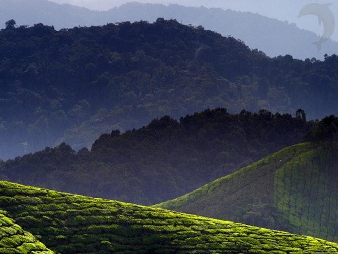 Singlereis Maleisië en Singapore 22-daagse rondreis