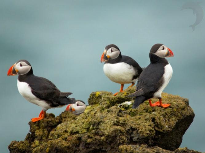 Singlereis IJsland 8-daagse rondreis