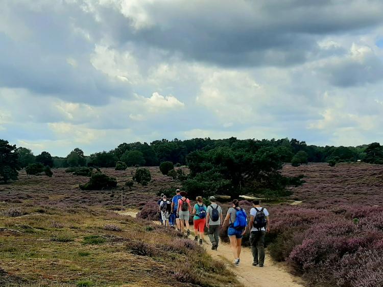 Singlereis Wandelen in Drenthe