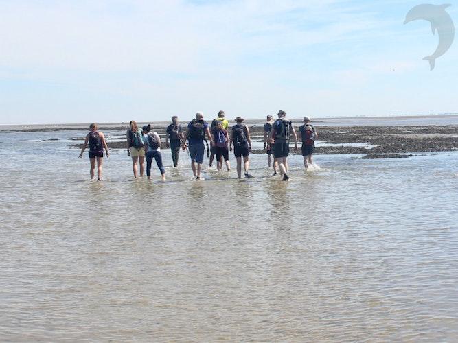 Singlereis Eilandhoppen Op de Waddenzee