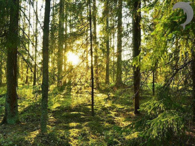 Singlereis Midzomer in Zweden