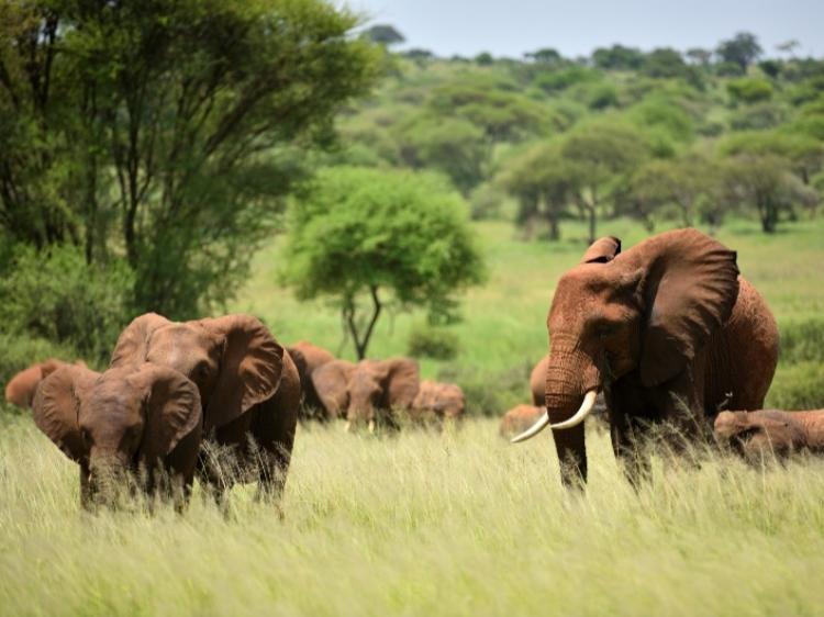Singlereis Kenia, Tanzania & Zanzibar 22-daagse rondreis