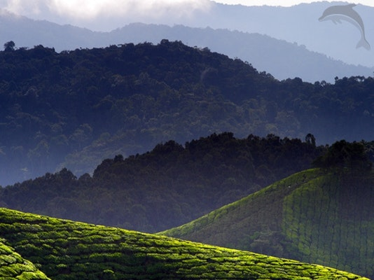 Singlereis Maleisië 15-daagse rondreis