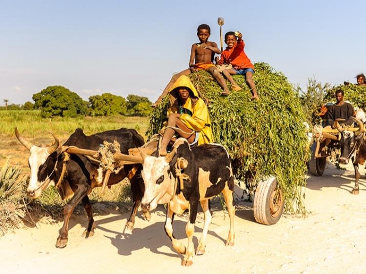 Singlereis Madagaskar 22-daagse rondreis