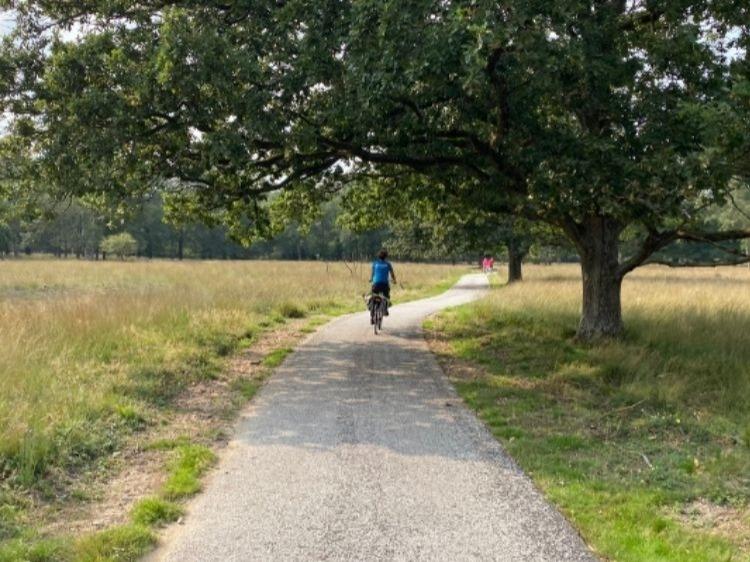 Singlereis Hike & Bike Op de Veluwe