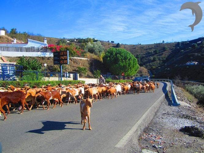 Singlereis Wandelen in Andalusië